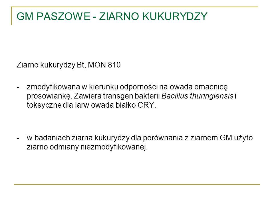 GM PASZOWE - ZIARNO KUKURYDZY Ziarno kukurydzy Bt, MON 810 -zmodyfikowana w kierunku odporności na owada omacnicę prosowiankę. Zawiera transgen bakter