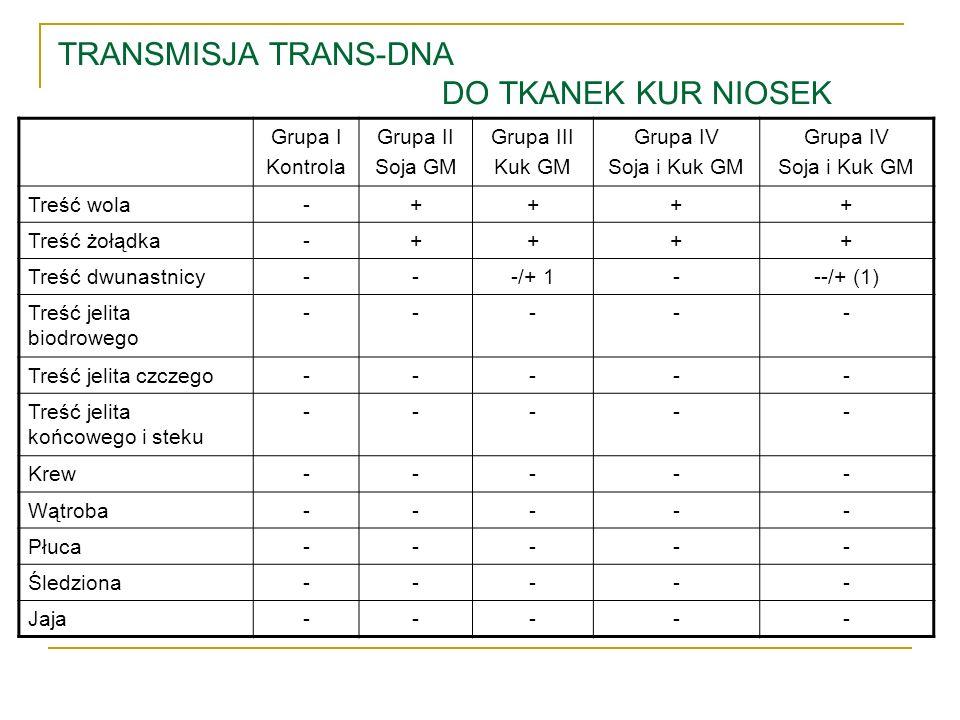 TRANSMISJA TRANS-DNA DO TKANEK KUR NIOSEK Grupa I Kontrola Grupa II Soja GM Grupa III Kuk GM Grupa IV Soja i Kuk GM Grupa IV Soja i Kuk GM Treść wola-