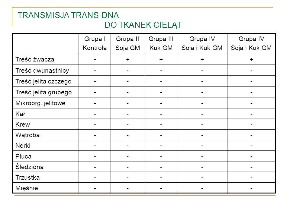 TRANSMISJA TRANS-DNA DO TKANEK CIELĄT Grupa I Kontrola Grupa II Soja GM Grupa III Kuk GM Grupa IV Soja i Kuk GM Grupa IV Soja i Kuk GM Treść żwacza-++