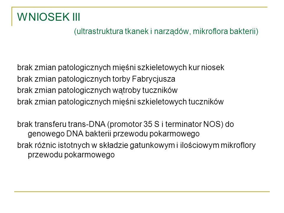 WNIOSEK III (ultrastruktura tkanek i narządów, mikroflora bakterii) brak zmian patologicznych mięśni szkieletowych kur niosek brak zmian patologicznyc