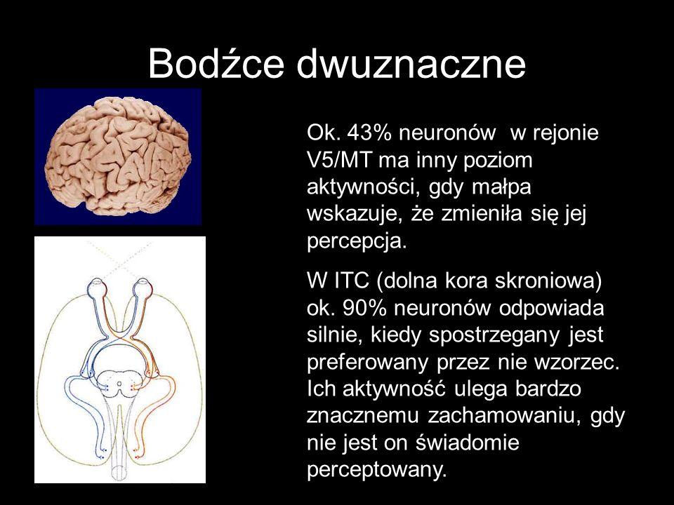 Bodźce dwuznaczne Ok. 43% neuronów w rejonie V5/MT ma inny poziom aktywności, gdy małpa wskazuje, że zmieniła się jej percepcja. W ITC (dolna kora skr