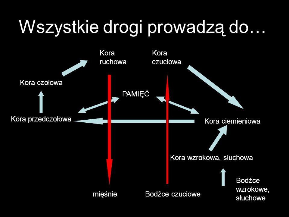 Drabina bytów Sygnały od receptorów Struktury integracyjne (wrażenia) Struktury asocjacyjne niższego rzędu (pojęcia pierwotne) Struktury asocjacyjne wyższego rzędu (pojęcia wtórne)