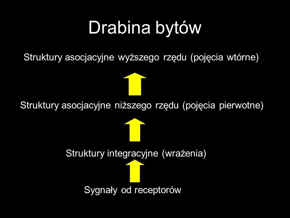 Drabina bytów Sygnały od receptorów Struktury integracyjne (wrażenia) Struktury asocjacyjne niższego rzędu (pojęcia pierwotne) Struktury asocjacyjne w