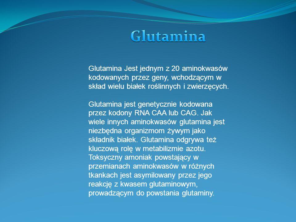 Glutamina Jest jednym z 20 aminokwasów kodowanych przez geny, wchodzącym w skład wielu białek roślinnych i zwierzęcych.