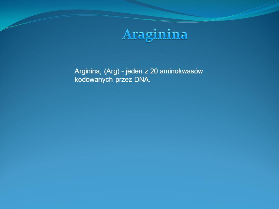 Arginina, (Arg) - jeden z 20 aminokwasów kodowanych przez DNA.