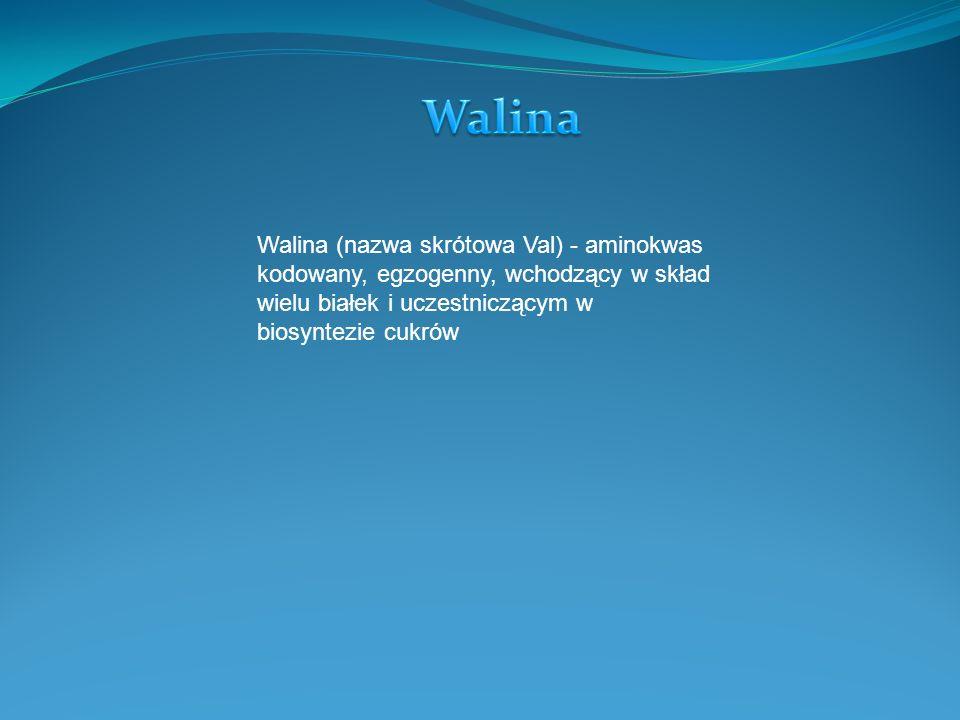 Walina (nazwa skrótowa Val) - aminokwas kodowany, egzogenny, wchodzący w skład wielu białek i uczestniczącym w biosyntezie cukrów