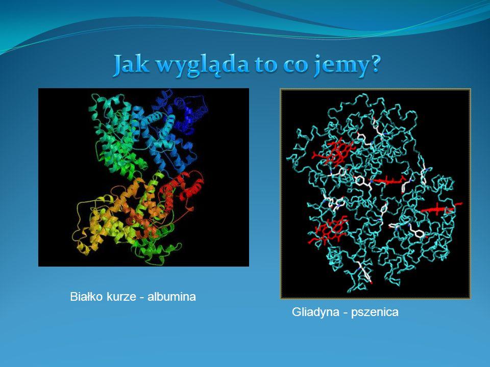 Białko kurze - albumina Gliadyna - pszenica