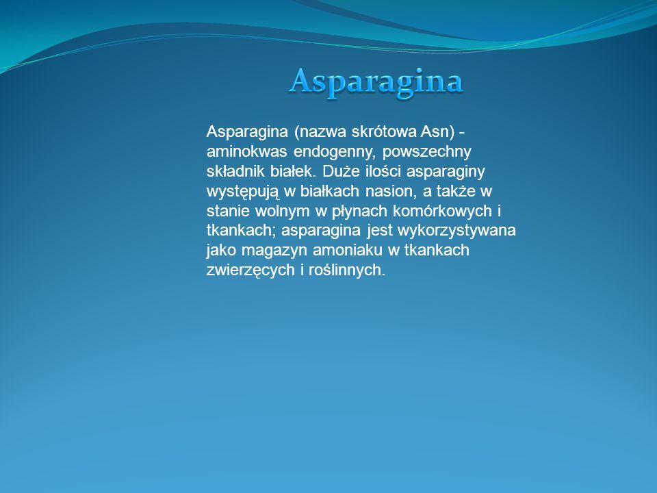 Asparagina (nazwa skrótowa Asn) - aminokwas endogenny, powszechny składnik białek. Duże ilości asparaginy występują w białkach nasion, a także w stani
