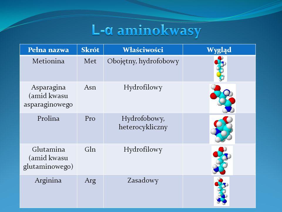 Pełna nazwaSkrótWłaściwościWygląd SerynaSerObojętny, hydrofilowy, hydroksyaminokwas TreoninaThrObojętny, hydrofilowy, hydroksyaminokwas WalinaValObojętny, hydrofobowy, alifatyczny HydroksyprolinaPro- OH Egzogenny, obojętny TyrozynaTyrKwasowy, aromatyczny