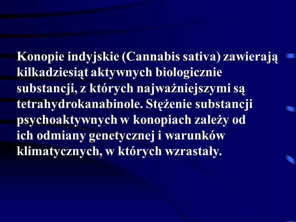 Konopie indyjskie (Cannabis sativa) zawierają kilkadziesiąt aktywnych biologicznie substancji, z których najważniejszymi są tetrahydrokanabinole.