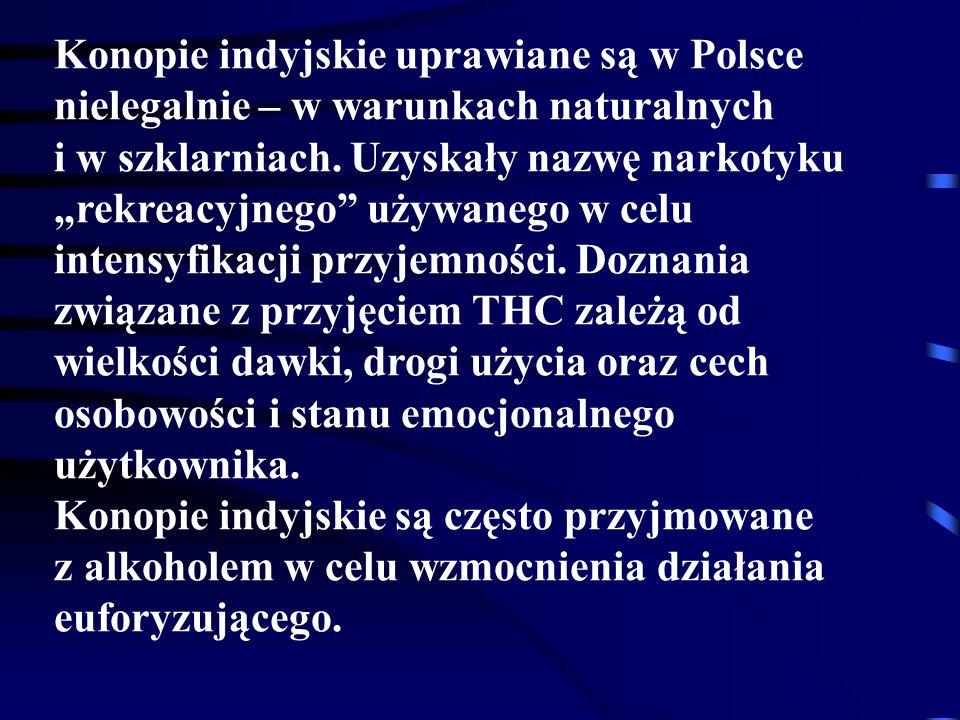 Konopie indyjskie uprawiane są w Polsce nielegalnie – w warunkach naturalnych i w szklarniach.