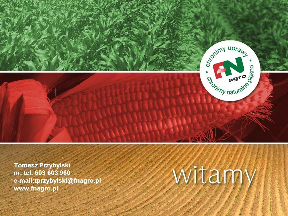 LIBRETTO – FAO 240 Charakterystyka cd: - ilość rzędów w kolbie: 14-16 - wysokość roślin : średnia (ok.