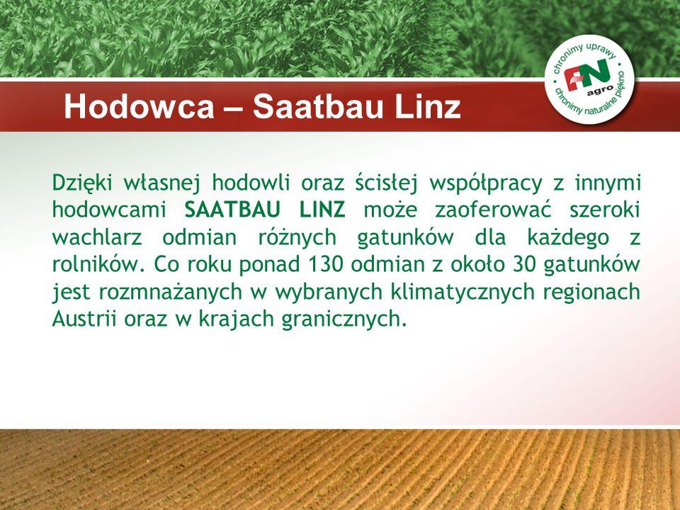 Odmiany kukurydzy w ofercie F &N Agro Polska: -Gaudio -Leonello -Adorno -Libretto