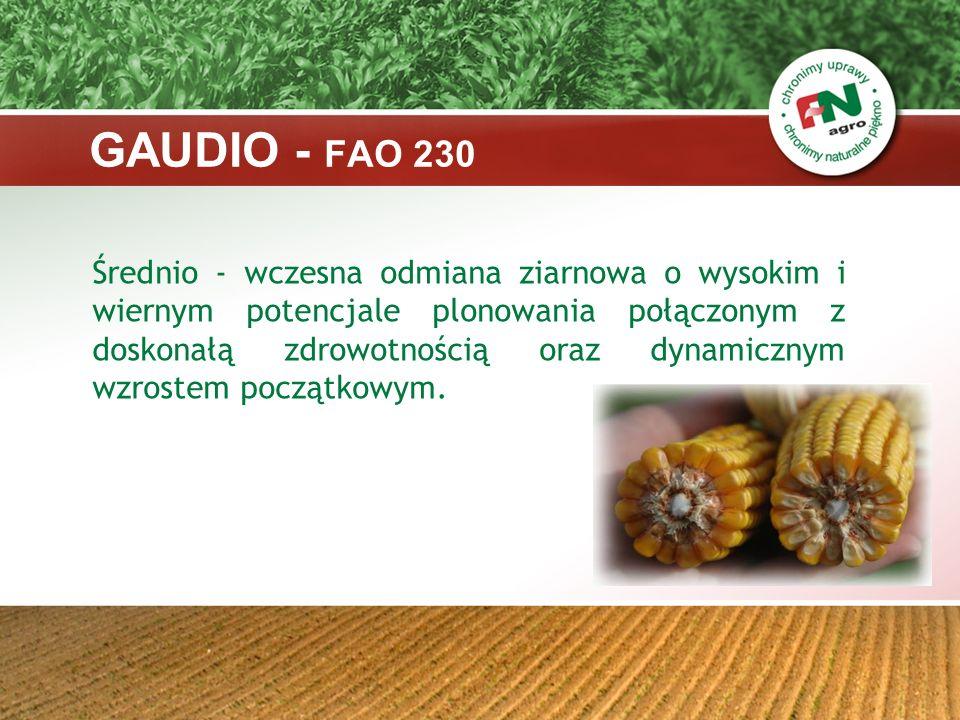 Charakterystyka: - mieszaniec pojedynczy - typ ziarna: flint/dent - ilość rzędów w kolbie: 14-16 - wysokość roślin : średnia - nadaje się do uprawy na terenie całego kraju - odporność na wyleganie: wysoka - odporność na Fuzarium: wysoka GAUDIO - FAO 230