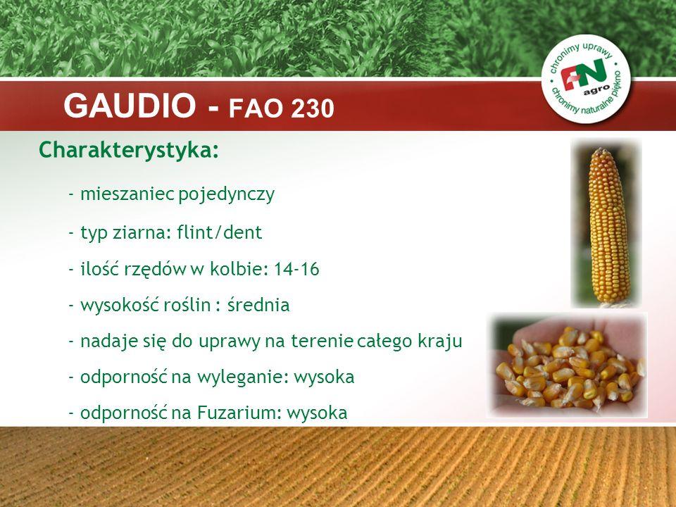 LEONELLO – FAO 260 Kukurydza kiszonkowa, gdzie wysoka jakość kiszonki idzie w parze z wysokim potencjałem plonowania, dobrym wczesnym wigorem oraz wysoką zdrowotnością roślin.
