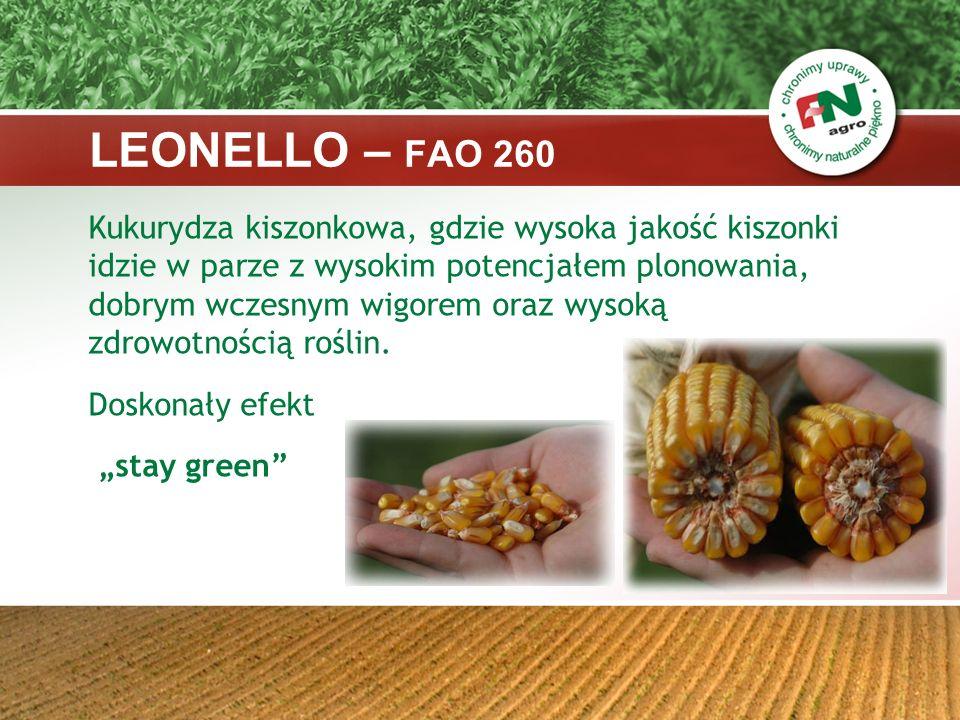 Charakterystyka: - mieszaniec pojedynczy - typ ziarna: flint/dent - ilość rzędów w kolbie: 14-16 - wysokość roślin : średnia (ok.