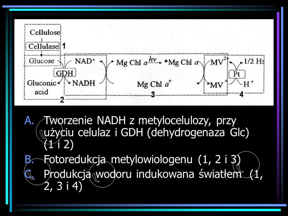 A.Tworzenie NADH z metylocelulozy, przy użyciu celulaz i GDH (dehydrogenaza Glc) (1 i 2) B.Fotoredukcja metylowiologenu (1, 2 i 3) C.Produkcja wodoru