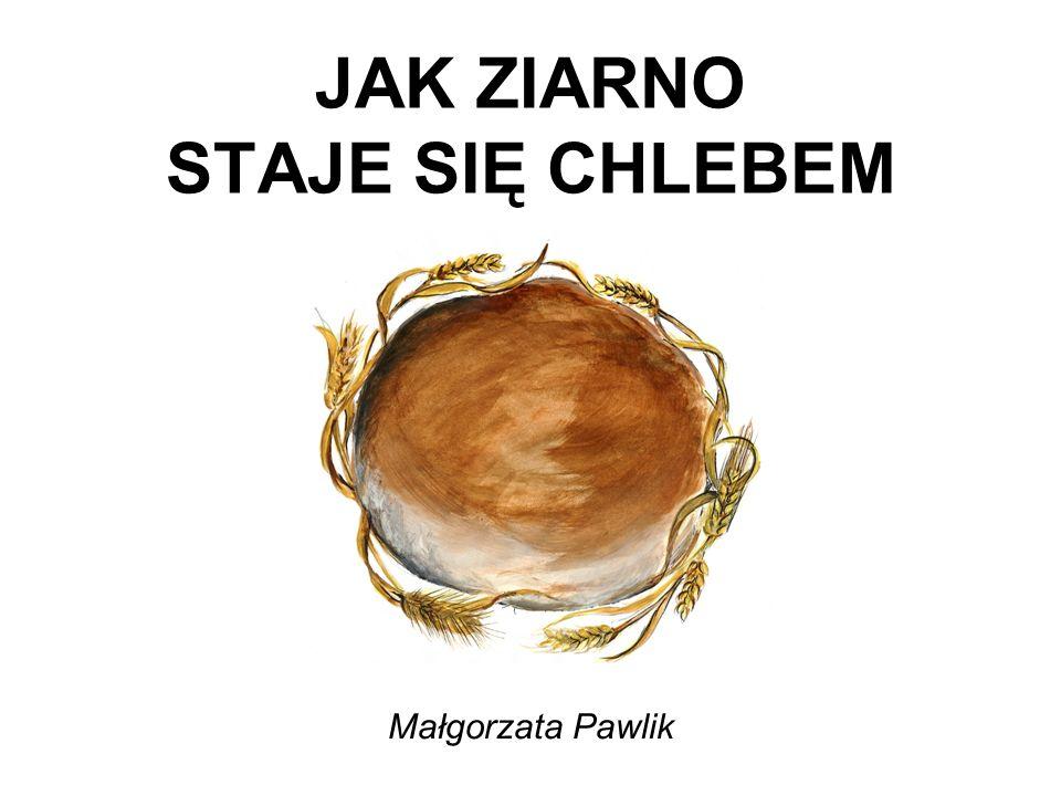 JAK ZIARNO STAJE SIĘ CHLEBEM Małgorzata Pawlik