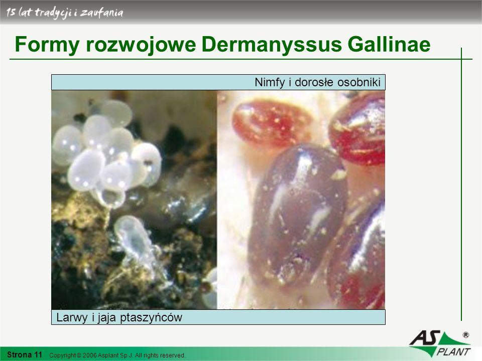 Strona 11 Copyright © 2006 Asplant Sp J. All rights reserved. Formy rozwojowe Dermanyssus Gallinae Nimfy i dorosłe osobniki Larwy i jaja ptaszyńców