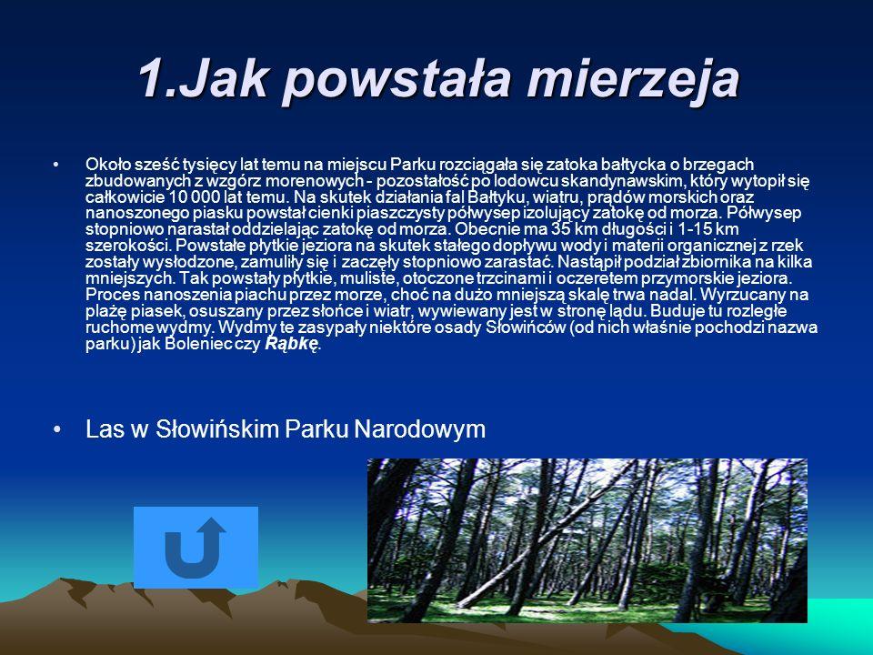 1.Jak powstała mierzeja Około sześć tysięcy lat temu na miejscu Parku rozciągała się zatoka bałtycka o brzegach zbudowanych z wzgórz morenowych - pozo