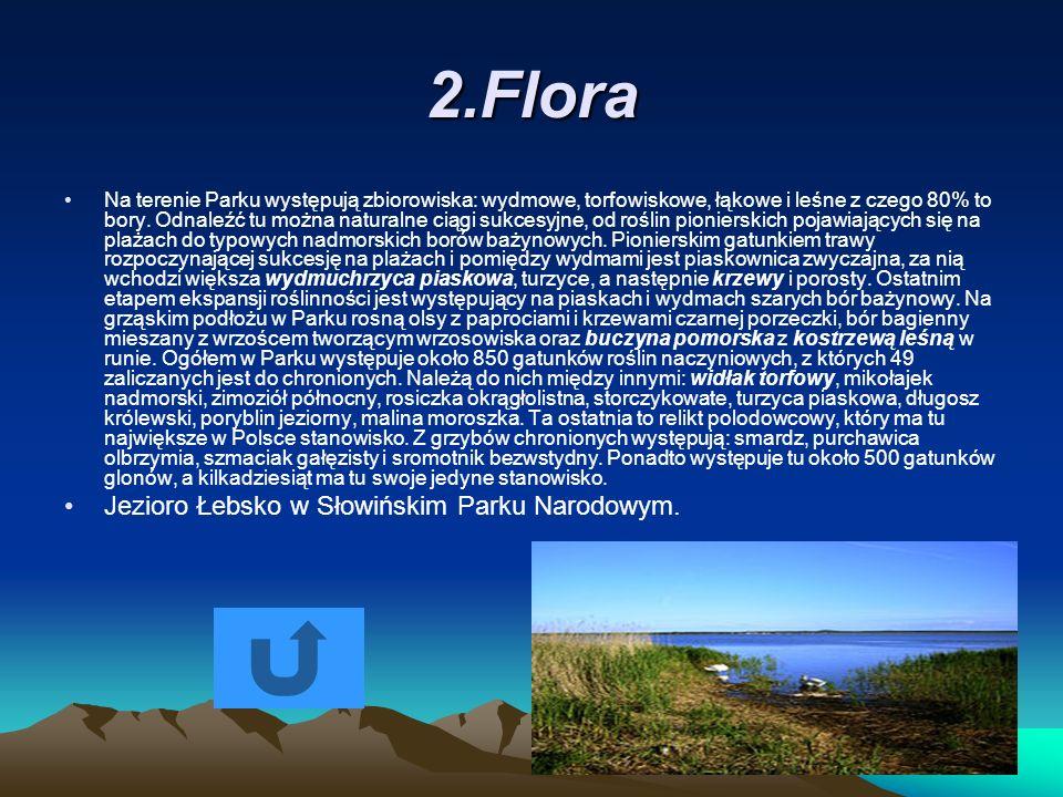 2.Flora Na terenie Parku występują zbiorowiska: wydmowe, torfowiskowe, łąkowe i leśne z czego 80% to bory. Odnaleźć tu można naturalne ciągi sukcesyjn