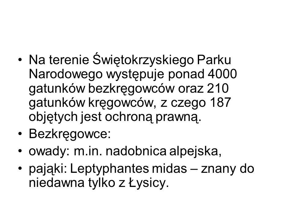Na terenie Świętokrzyskiego Parku Narodowego występuje ponad 4000 gatunków bezkręgowców oraz 210 gatunków kręgowców, z czego 187 objętych jest ochroną