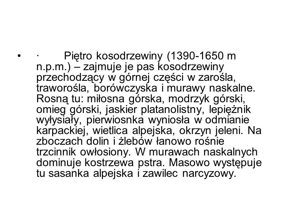 · Piętro kosodrzewiny (1390-1650 m n.p.m.) – zajmuje je pas kosodrzewiny przechodzący w górnej części w zarośla, traworośla, borówczyska i murawy nask