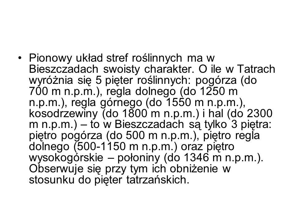 Pionowy układ stref roślinnych ma w Bieszczadach swoisty charakter. O ile w Tatrach wyróżnia się 5 pięter roślinnych: pogórza (do 700 m n.p.m.), regla