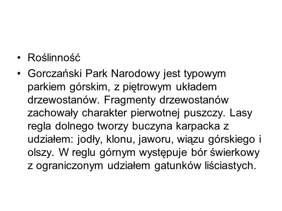 Roślinność Gorczański Park Narodowy jest typowym parkiem górskim, z piętrowym układem drzewostanów. Fragmenty drzewostanów zachowały charakter pierwot