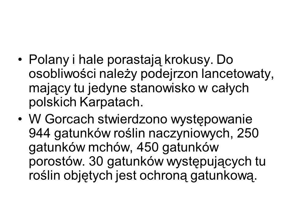 Polany i hale porastają krokusy. Do osobliwości należy podejrzon lancetowaty, mający tu jedyne stanowisko w całych polskich Karpatach. W Gorcach stwie