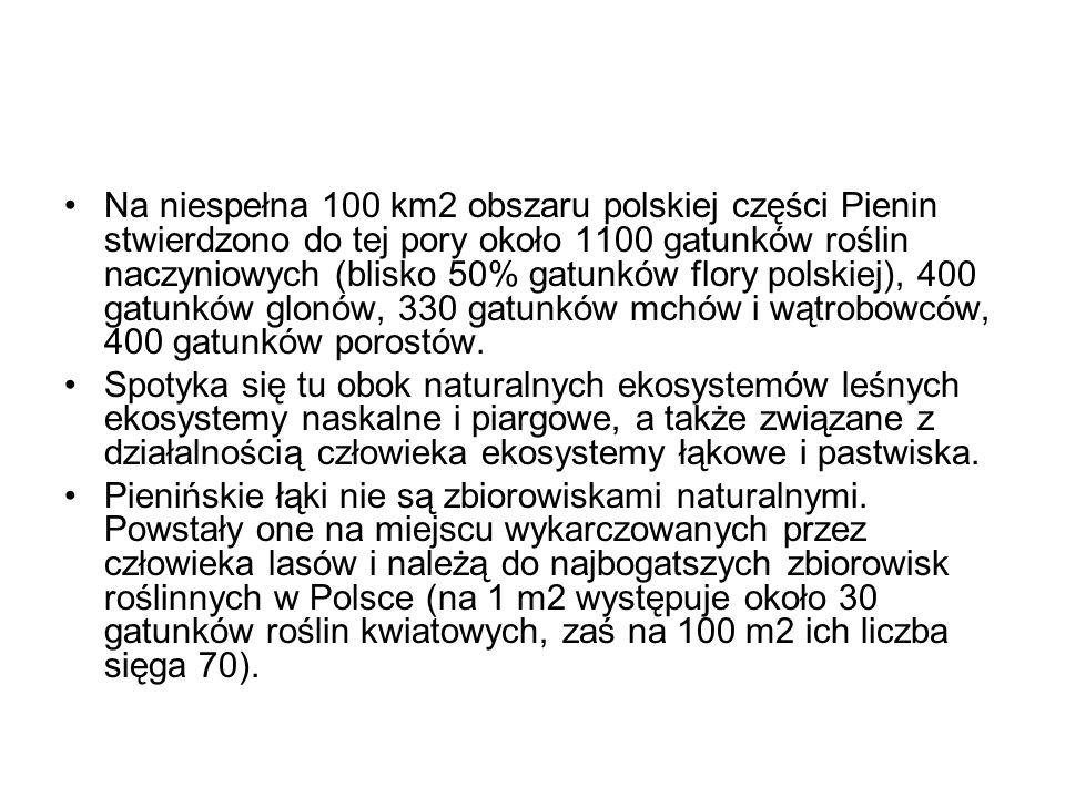 Na niespełna 100 km2 obszaru polskiej części Pienin stwierdzono do tej pory około 1100 gatunków roślin naczyniowych (blisko 50% gatunków flory polskie