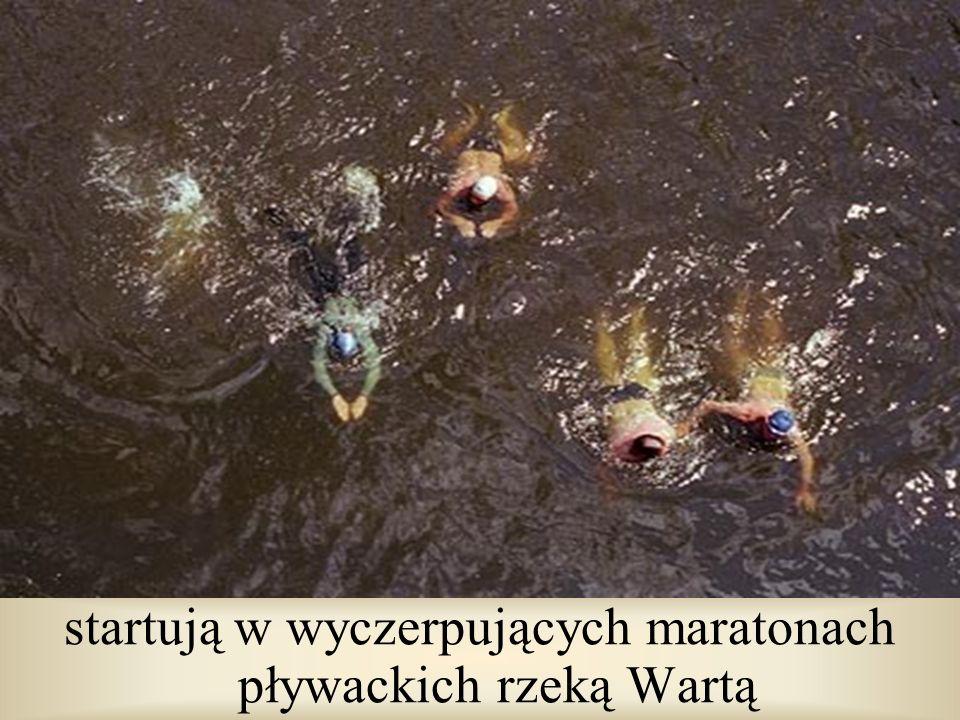 startują w wyczerpujących maratonach pływackich rzeką Wartą