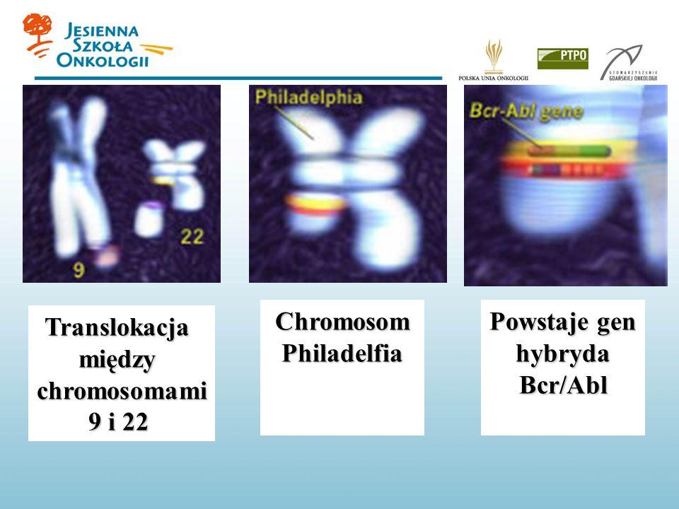 Translokacjamiędzychromosomami 9 i 22 Powstaje gen hybrydaBcr/Abl ChromosomPhiladelfia