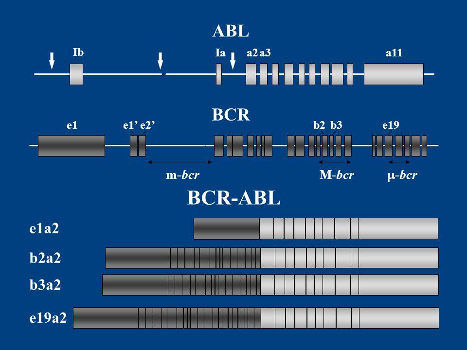 e19a2 b3a2 b2a2 e1a2 BCR-ABL Ib Iaa11a2a3 ABL BCR e1b3b2e19e2e1 m-bcrM-bcr -bcr