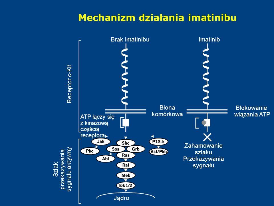 Mechanizm działania imatinibu Jądro Szlak przekazywania sygnału aktywny Receptor c-Kit Brak imatinibuImatinib Blokowanie wiązania ATP Zahamowanie szlaku Przekazywania sygnału Błona komórkowa ATP łączy się z kinazową częścią receptora