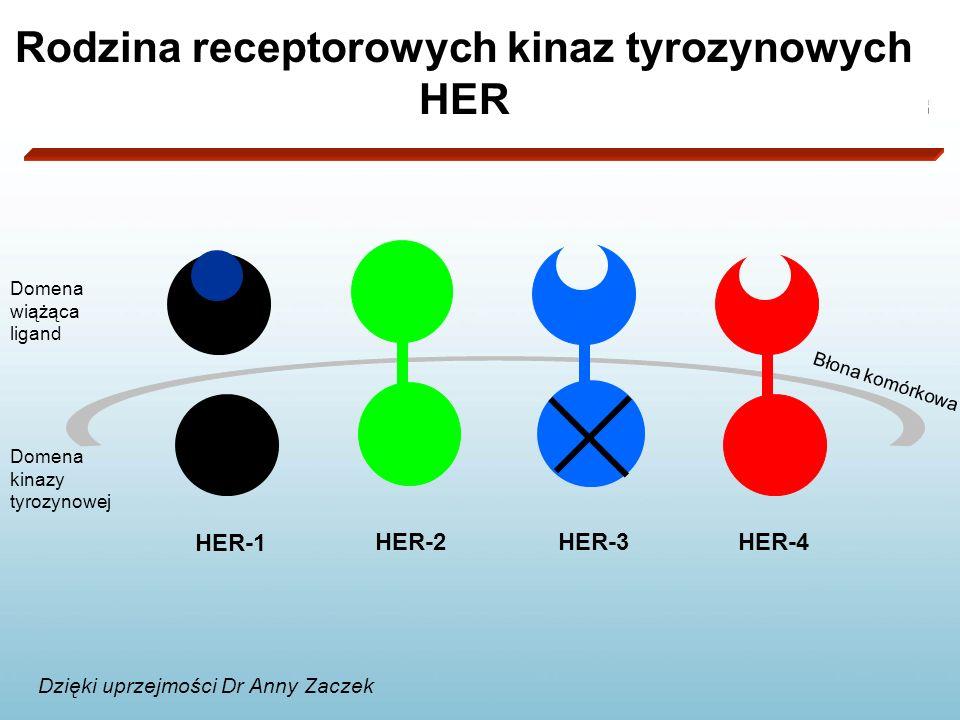 Rodzina receptorowych kinaz tyrozynowych HER HER-1 HER-2HER-3HER-4 Domena wiążąca ligand Domena kinazy tyrozynowej Błona komórkowa Dzięki uprzejmości Dr Anny Zaczek