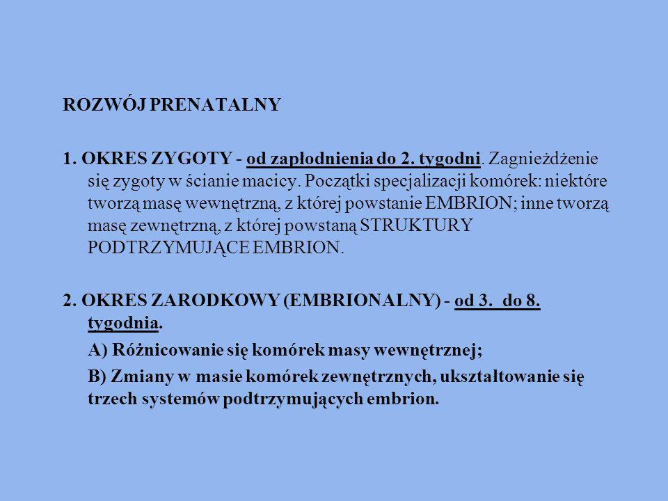 Ad.A) - - Trzy listki zarodkowe: 1. ENDODERMA - zaczątek organów wewnętrznych i gruczołów; 2.