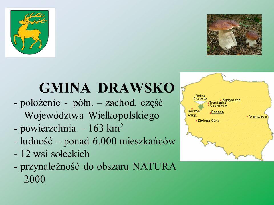 GMINA DRAWSKO - położenie - półn. – zachod. część Województwa Wielkopolskiego - powierzchnia – 163 km 2 - ludność – ponad 6.000 mieszkańców - 12 wsi s