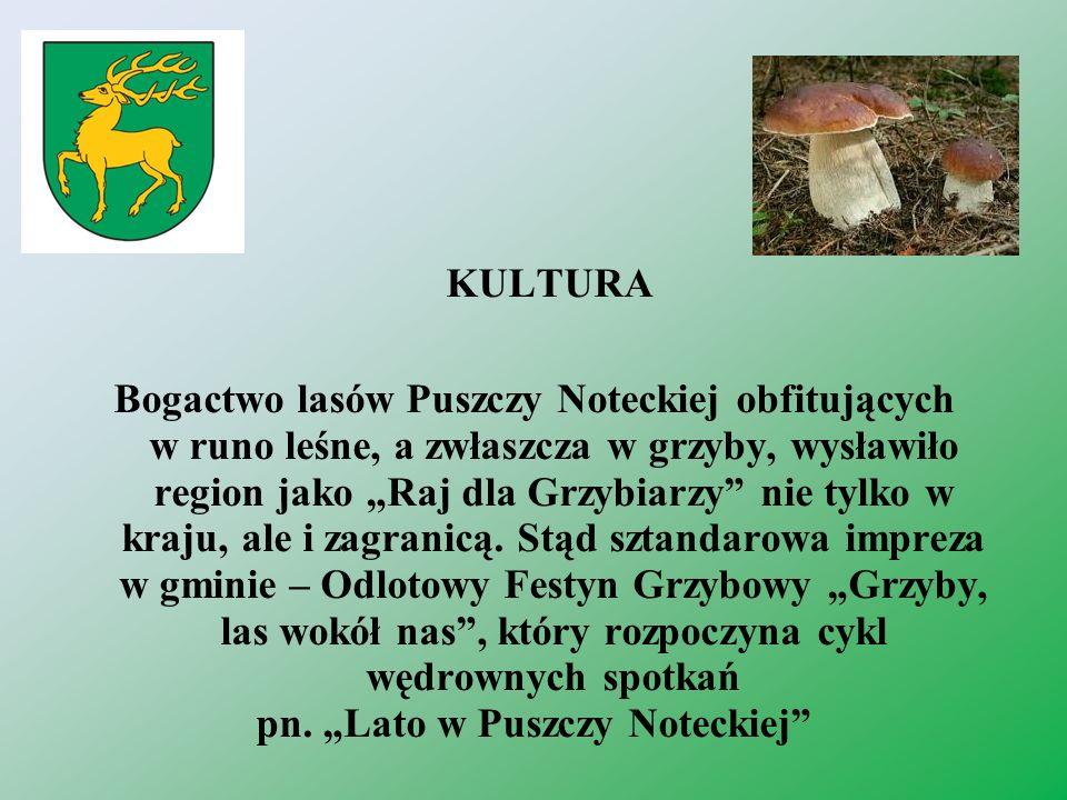KULTURA Bogactwo lasów Puszczy Noteckiej obfitujących w runo leśne, a zwłaszcza w grzyby, wysławiło region jako Raj dla Grzybiarzy nie tylko w kraju,
