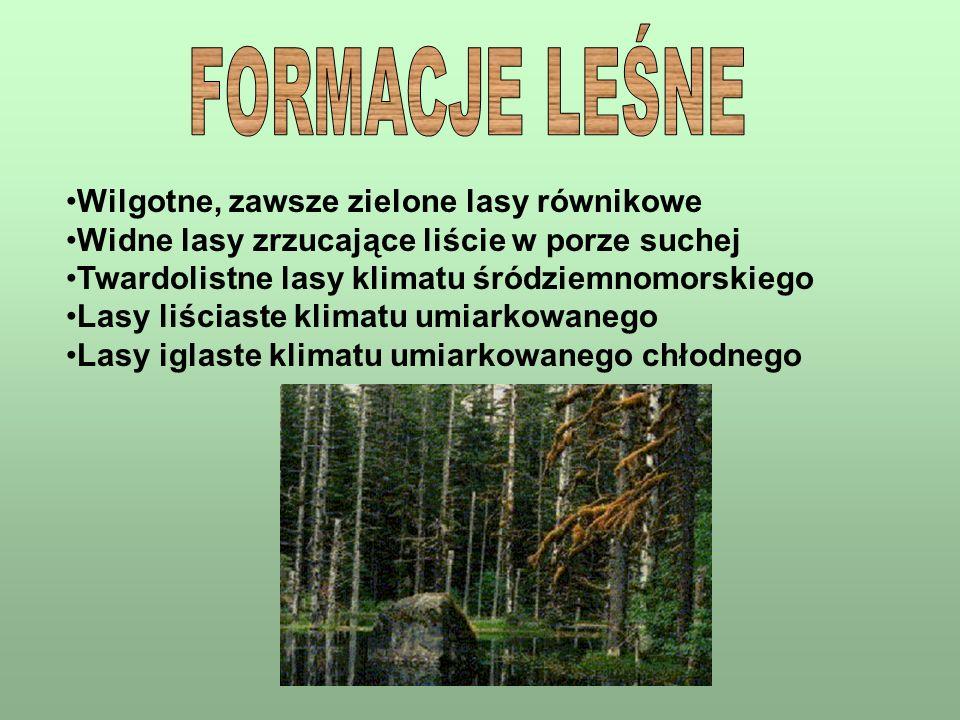 Wilgotne, zawsze zielone lasy równikowe Widne lasy zrzucające liście w porze suchej Twardolistne lasy klimatu śródziemnomorskiego Lasy liściaste klima