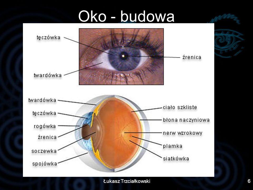 Łukasz Trzciałkowski6 Oko - budowa