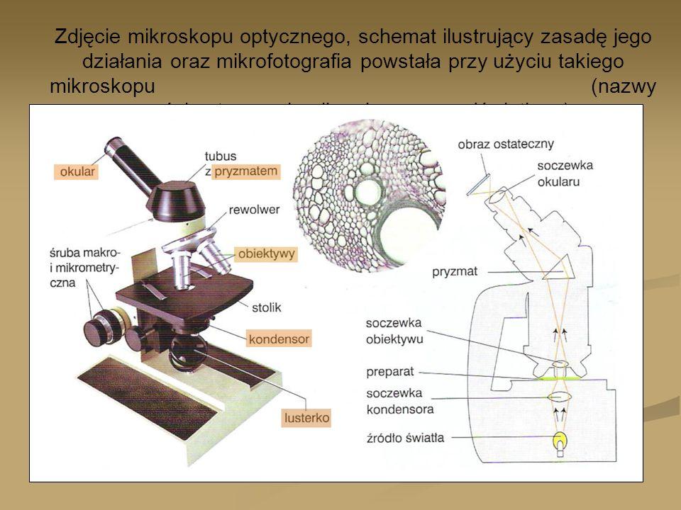 Zdjęcie mikroskopu optycznego, schemat ilustrujący zasadę jego działania oraz mikrofotografia powstała przy użyciu takiego mikroskopu (nazwy części op
