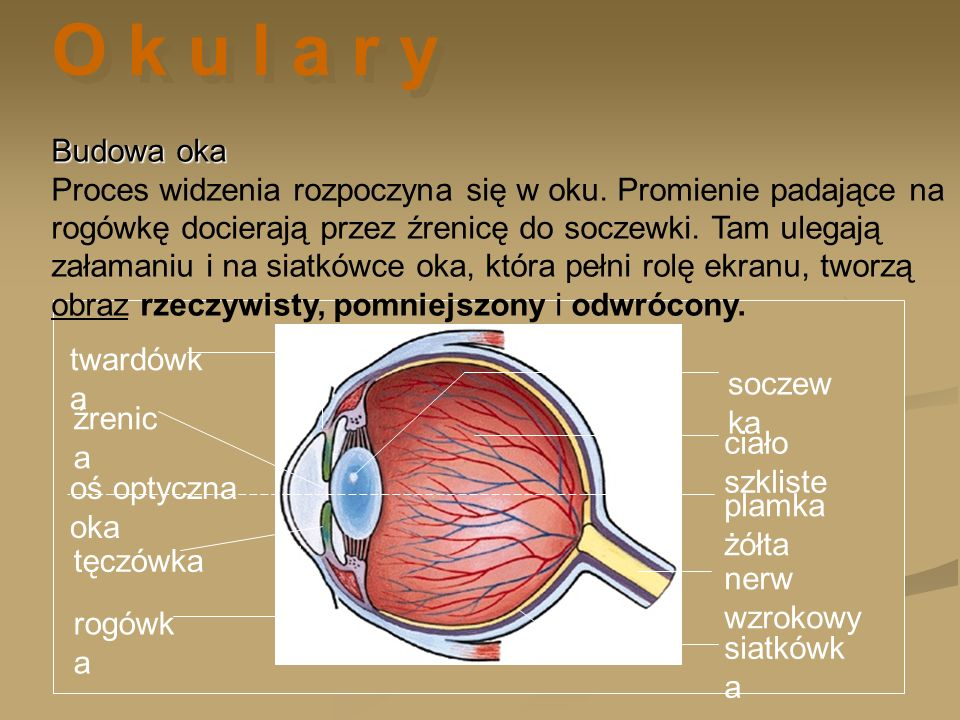 twardówk a rogówk a oś optyczna oka tęczówka siatkówk a plamka żółta nerw wzrokowy soczew ka ciało szkliste źrenic a Budowa oka Budowa oka Proces widz
