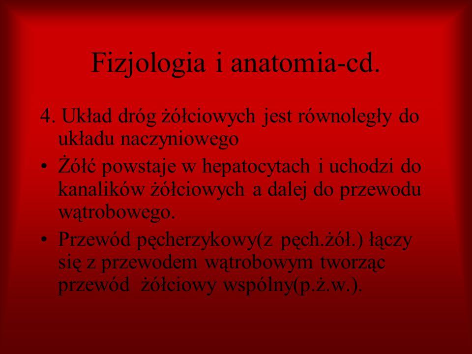 Fizjologia i anatomia-cd. 4. Układ dróg żółciowych jest równoległy do układu naczyniowego Żółć powstaje w hepatocytach i uchodzi do kanalików żółciowy