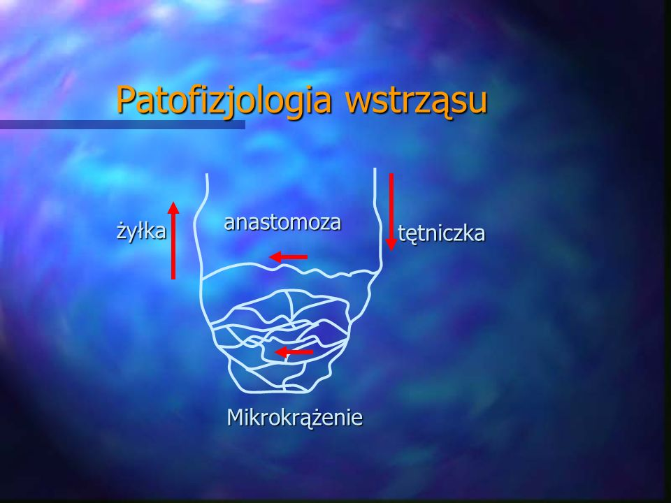 Mikrokrążenie żyłka tętniczka anastomoza Patofizjologia wstrząsu