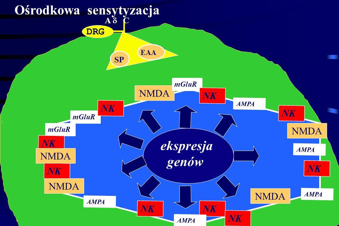 Nocycepcja w R.T. A C SP EAA NMDA mGluR AMPA NK EAA SP Ca ++ PLC Ca PKC DAG IP3 RE depolaryzacja AA PLA2 COX2 PG PG NO NOS NO Ca ++ Mg ++ Ca ++ NO EAA
