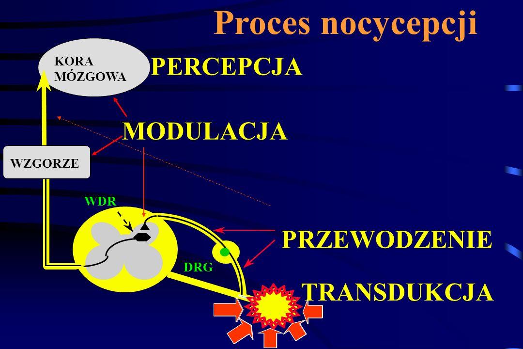 Ból neuropatyczny Złożony mechanizm powstawania DRG RT Kanały Na TTX -R Kanały Ca VSCCs efapsy Sensytyzacja Facilitacja Aktywność samoistna Osłabienie zstępujących mechanizmów kontroli: GABA NA, 5-HT3 Cholinerg.