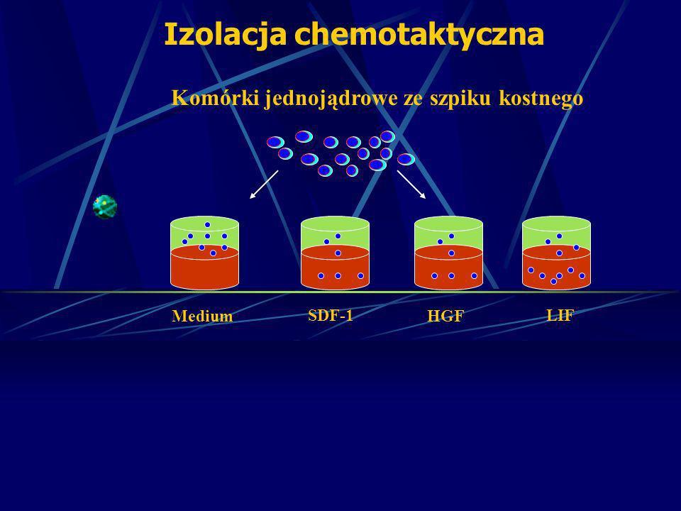 Komórki jednojądrowe ze szpiku kostnego MediumHGF Izolacja chemotaktyczna SDF-1LIF