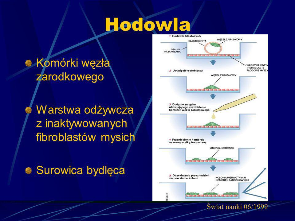 Hodowla Komórki węzła zarodkowego Warstwa odżywcza z inaktywowanych fibroblastów mysich Surowica bydlęca Świat nauki 06/1999