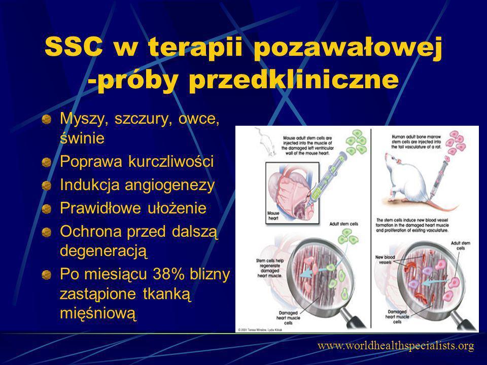 SSC w terapii pozawałowej -próby przedkliniczne Myszy, szczury, owce, świnie Poprawa kurczliwości Indukcja angiogenezy Prawidłowe ułożenie Ochrona prz